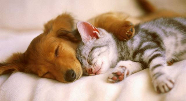 Image result for DOGS AND CATS